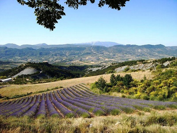 lavender french walking holiday baronnies
